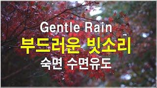 Rain Sounds 90mins -White Noise 비오는소리 빗소리  가을 단풍 비소리 -  ASMR