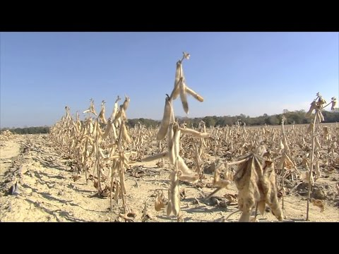 Drought Leads To Miserable Crops For Some Georgia Farmers