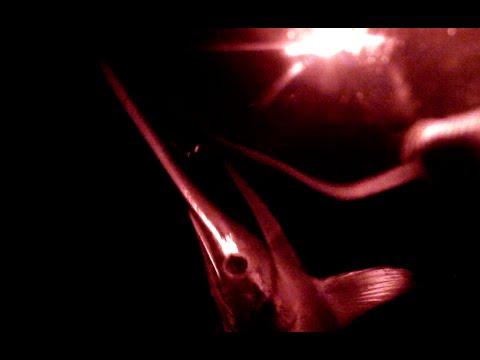 Underwater Swordfish video at 1600'