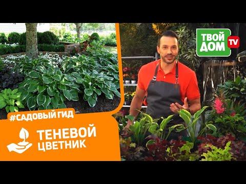 Теневой цветник: как подобрать растения?   Все в сад