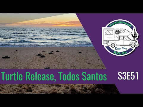 Turtle Release, Todos Santos S3E51   Grand Adventure To Baja Sur - Roam Free