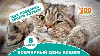 Всемирный день кошек. 8 августа. Магазин зоотоваров в городе Колпино (СПб).