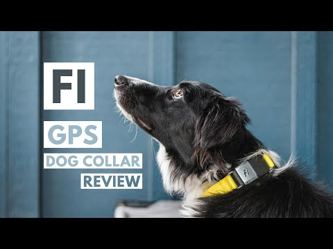 Fi Dog Collar Review 2020: Our Genuine Thoughts on this GPS Dog Tracker For OffLeash + Adventures
