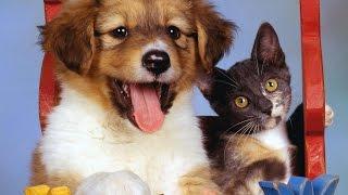Смешные котята   смешное про котов!