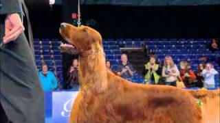 Watch National Dog Show (2010) online - [Full Videos] (HD)