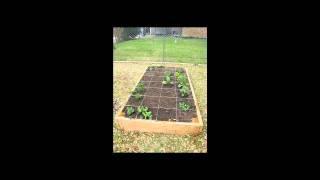 Gardening For Beginners, Gardening Tips, Organic Vegetable Gardening