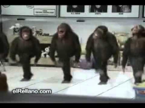 Happy Birthday Monkey Funny Video