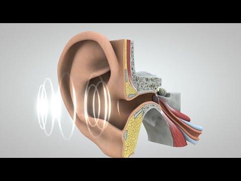 Journey of Sound to the Brain (NIDCD)