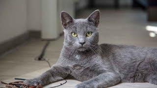 Как определить срок беременности у кошки