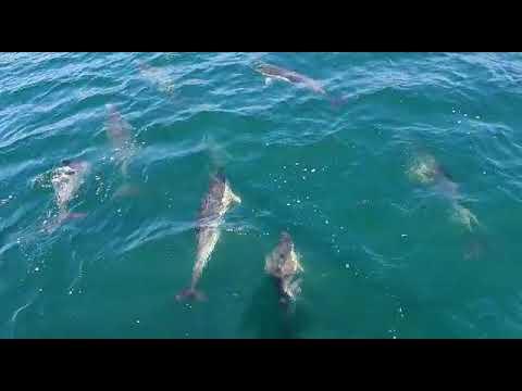 Un grupo de delfines se 'divierte' en la ría de Arousa