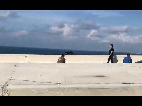 Deuce - Dog Rescued On Skyway Bridge