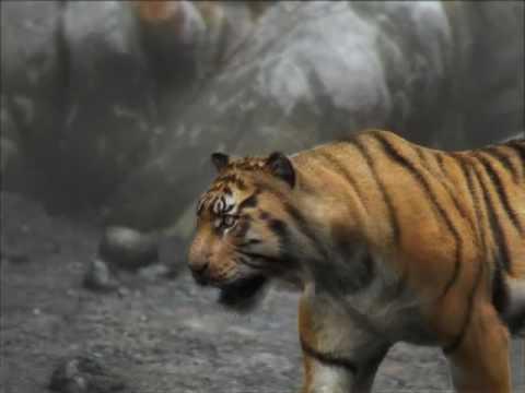 Tiger Dragon 3DCG Animation - YouTube