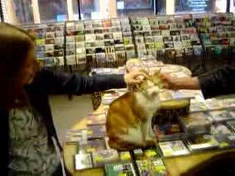 Cat in musicstore Boudisque, Amsterdam