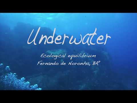 Fernando de Noronha Underwater