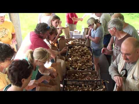 Top 6 Morel Mushroom Hunting Tips by Chris Matherly