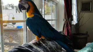 Here is Proof I potty trained my parrot