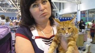 Выставка кошек. Хозяйка Мейн Куна рассказывает об особенностях породы