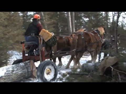 Horse Logging: Timber to Cabin Part 1