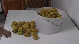 """La manzana """"urtebete"""""""