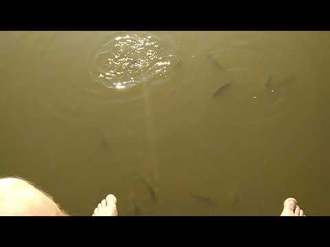 Видео База отдыха Терем кормим рыб
