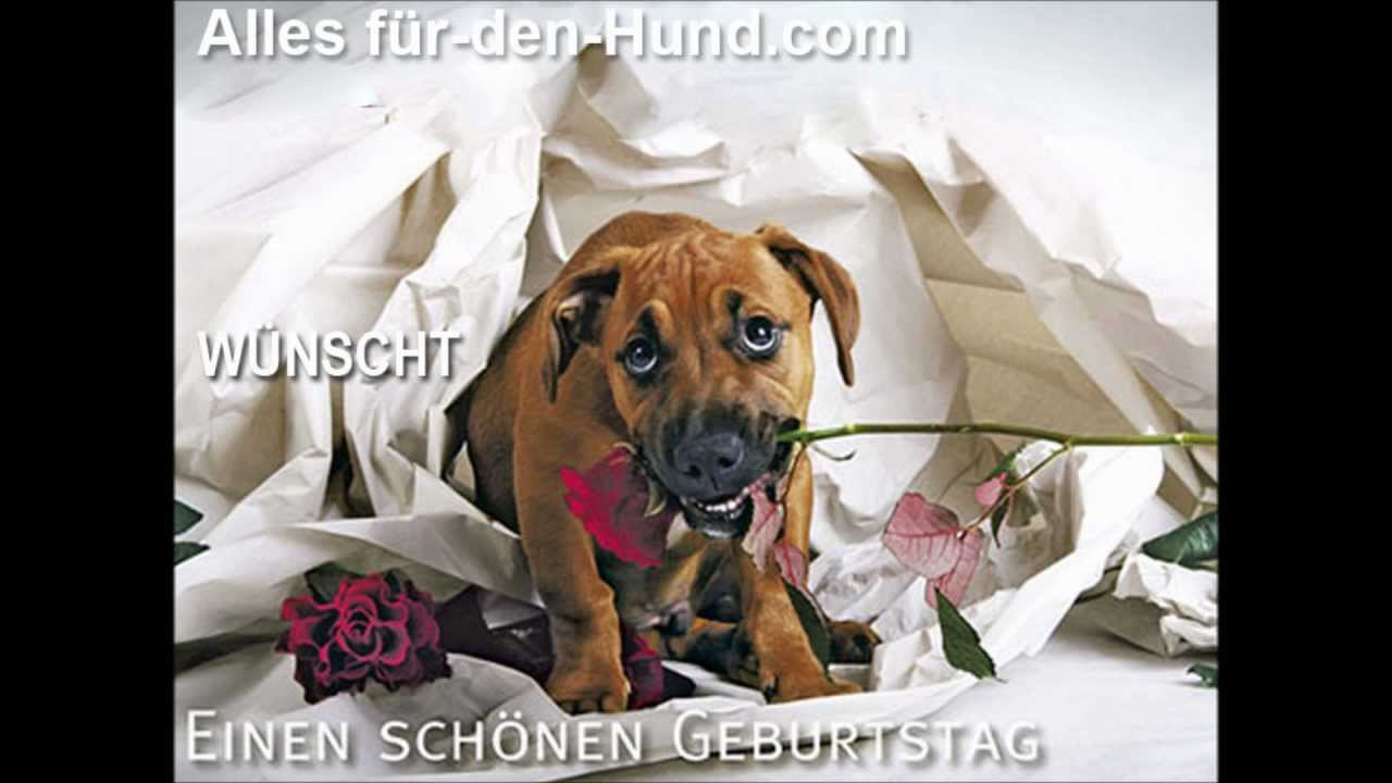 happy birthday von alles f r den hund youtube. Black Bedroom Furniture Sets. Home Design Ideas