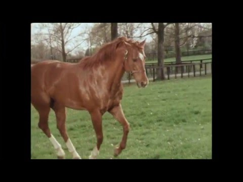 Secretariat In Retirement