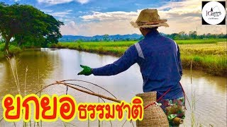 ยกยอ Nature ►Fishing lifestyle Ep.159