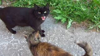These cats are still afraid of me and a black cat hisses