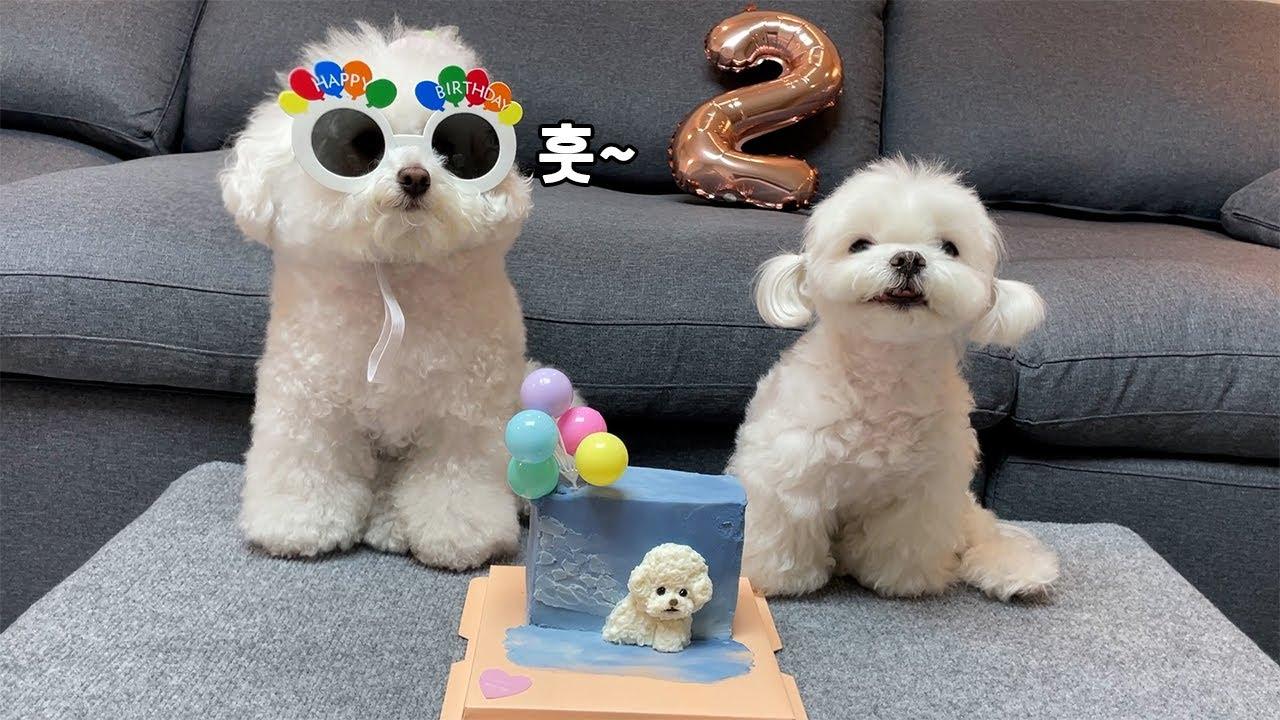 귀여운 강아지 생일 파티에 초대합니다~🎉