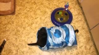 Черный и полосатый игривые котята от Котовасия TV