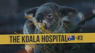 THE KOALA HOSPITAL | 🇦🇺 Australia Daily Vlog #3