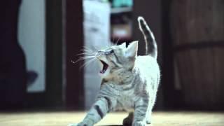 Битва котов в замедленной съёмке