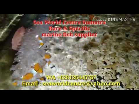 Marine fish supplier from Indian Ocean , looking for wholesaler.