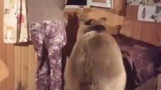 dEAR RUSSIAN FRIEND
