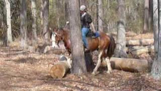 Shaggy - QH gelding - Ranch Horse