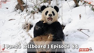 【Panda Billboard】Episode 84 | iPanda