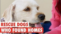 Rescue Dogs Who Found Forever Homes