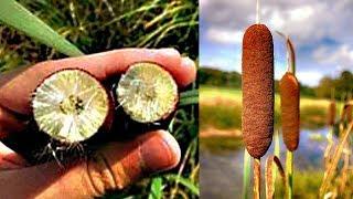 10 русских растений, которые помогут вам ВЫЖИТЬ...
