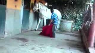 carzone toreando a un caballo