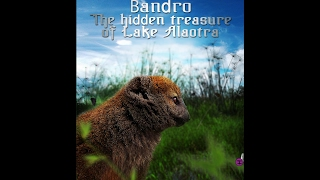 Bandro The hidden treasure of lake Alaotra