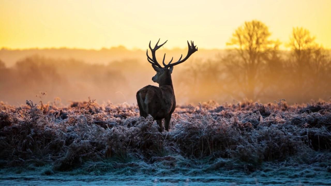 Xem và Download 80 hình nền độ phân giải 4K phong cảnh thiên nhiên tuyệt đẹp