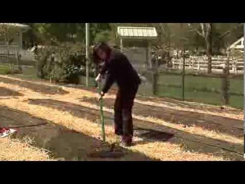 Preparing Soil For Planting An Organic Vegetable Garden