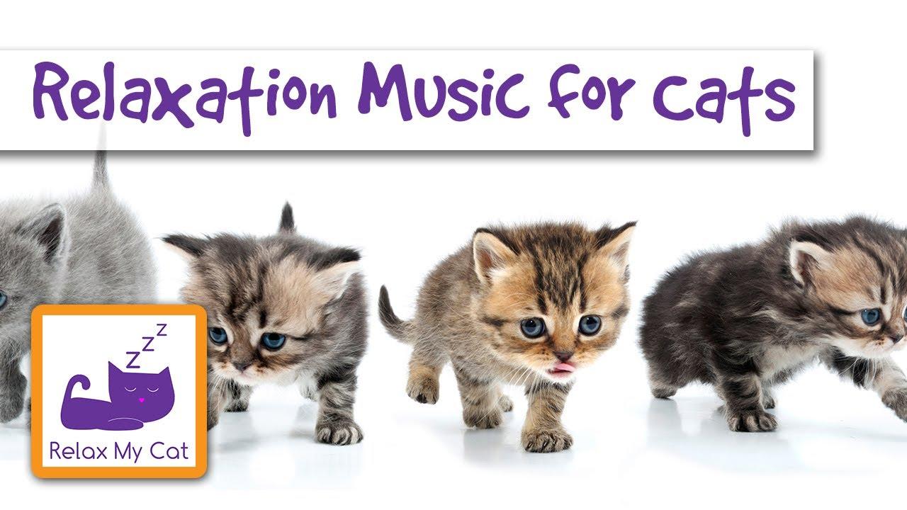 cat litter box holder