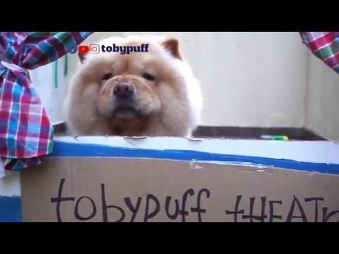 DOG CHOW CHOW IN A PUPPET SHOW!!!