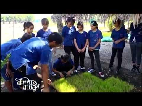 T194-B2 : เรียนรู้การทำนาโยนกล้า ที่พิพิธภัณฑ์การเกษตรเฉลิมพระเกียรติพระบาทสมเด็จพระเจ้าอยู่หัว