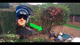Taking on a HUGE Laurel hedge