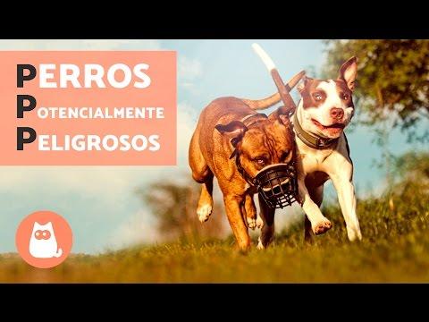 Perros potencialmente peligrosos en España (PPP)