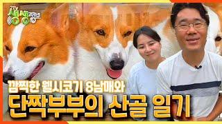 [2TV 생생정보] 깜찍한 웰시코기 8남매와 단짝 부부의 산골 일기♡ | KBS 210930 방송