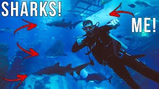 SHARK DIVING IN 10 MILLION LITER AQUARIUM IN DUBAI MALL! *INSANE*