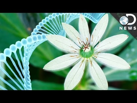 Why Do Humans Have Less DNA Than This Flower?